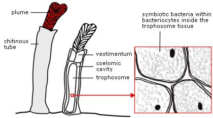 Fig 3.10.c